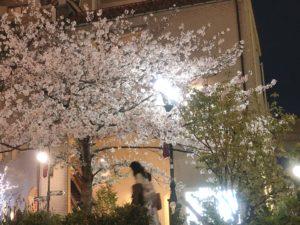宝塚の夜桜